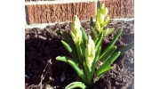 Words For The Eyes